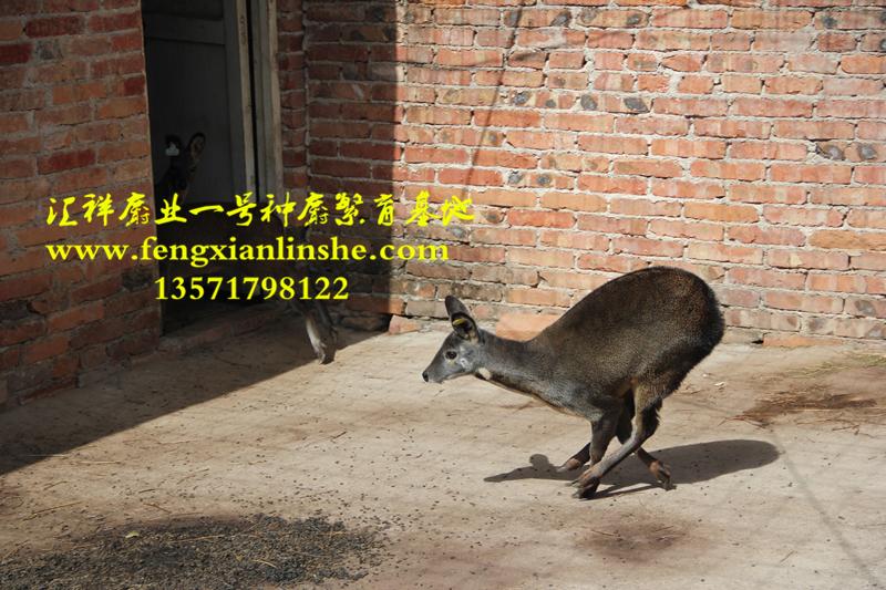 壁纸 动物 狗 狗狗 800_533