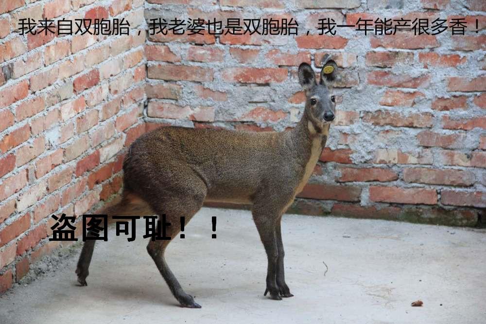 壁纸 动物 鹿 1000_666
